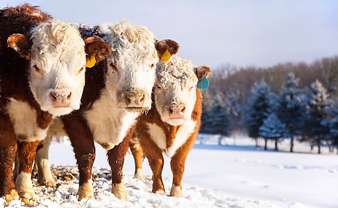 New Year for Dairy Farmers